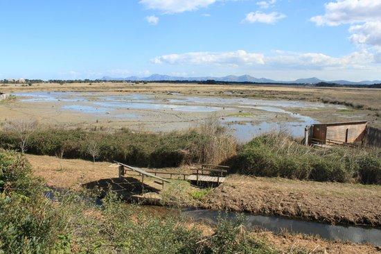 Parque natural s'Albufera de Mallorca: S'Albufera Wetlands