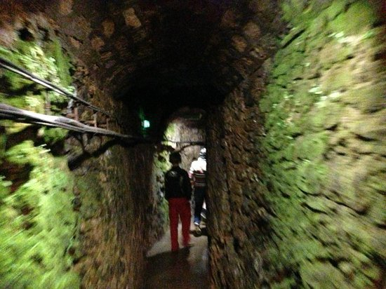 Société des Caves Roquefort - Visite des Caves: 2013