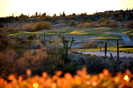 Westin La Paloma Resort and Spa : Golf Course and Saguaros