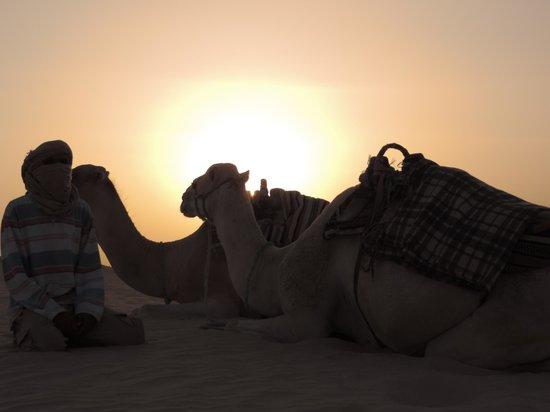 Club Marmara Hammamet Beach : Chameaux au Sahara