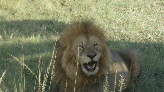 Mara Serena Safari Lodge: Amazing