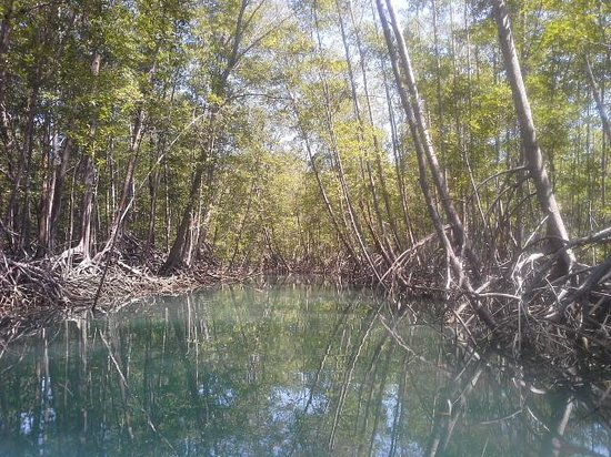 Aventuras Tropicales Golfo Dulce: Mangroves