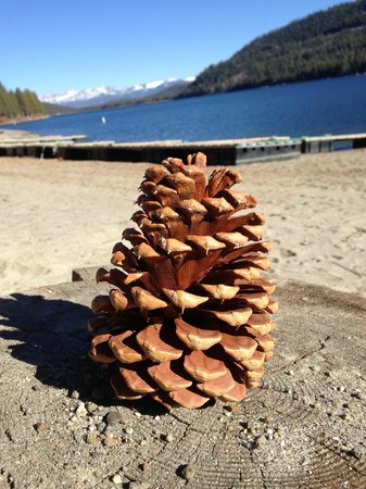 Donner Lake Village: The cones were falling from the pines