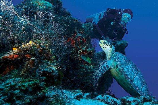 Playa Diving Center: conzumel