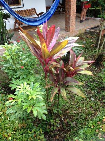 Hotel Escape Caribeno: Piante giardino