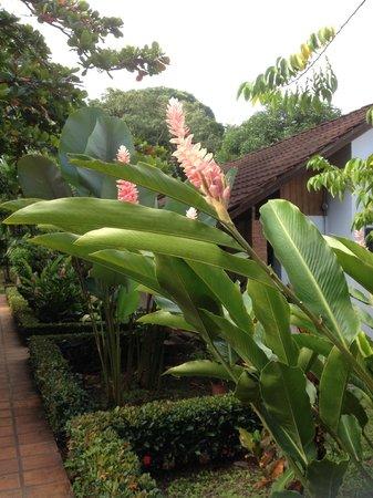 Hotel Escape Caribeno: Fiori giardino