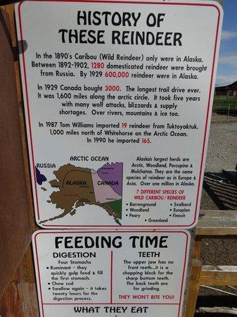 Reindeer Farm: More about reindeer