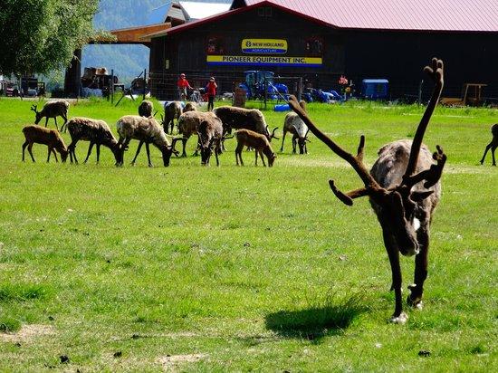Reindeer Farm : Farm view - 1