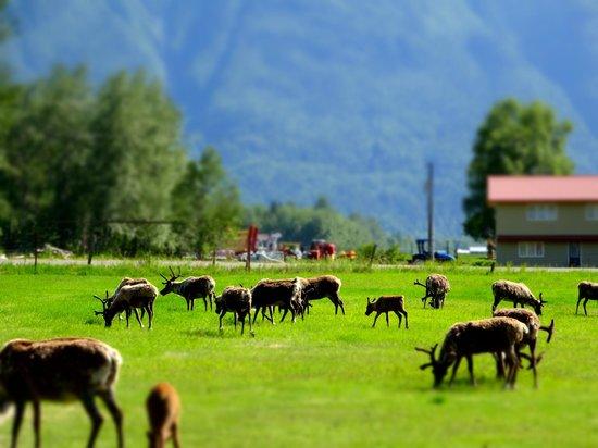 Reindeer Farm: Farm view - 2