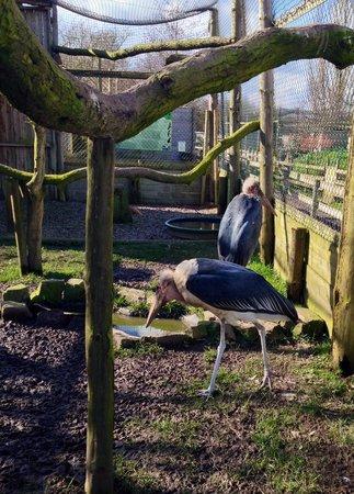 Gauntlet Birds of Prey: amazing storks!