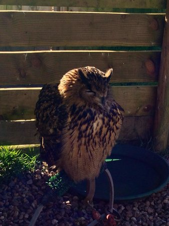 Gauntlet Birds of Prey: Owl always remember this day out! :)