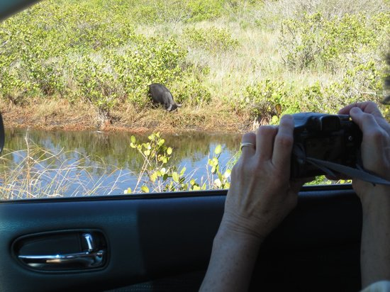 Black Point Wildlife Drive: Easy viewing !