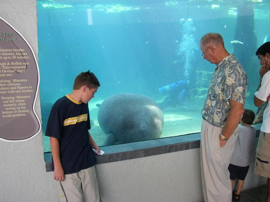 Mote Marine Laboratory and Aquarium: This one is from 11 years ago already... time flies!