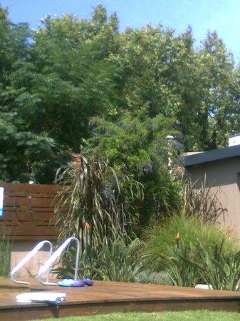 Posada El Capullo : Jardín alrededor de la piscina