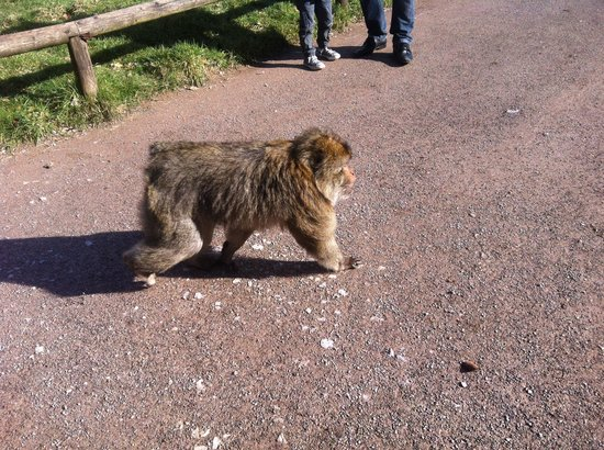 Trentham Gardens: Right in front of us