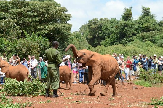 David Sheldrick Wildlife Trust: Feeding