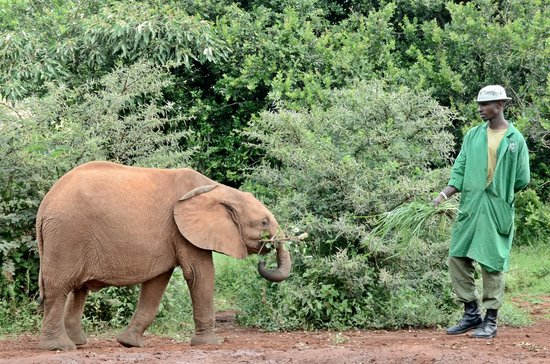 David Sheldrick Wildlife Trust: Training