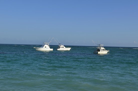 Success picture of punta cana fishing charters punta for Punta cana fishing