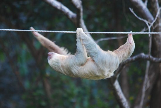 Villa Kristina Apartments: Sloth zip line (aka the power line)