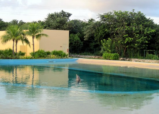 Dolphinaris Riviera Maya Park: Dolphins swimming in pools wasn't our idea of a natural experience