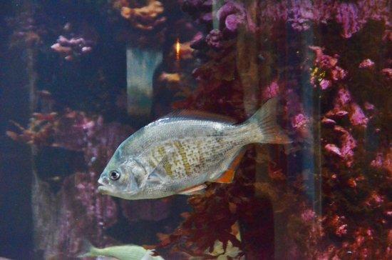 Oregon Coast Aquarium: The exhibits are tastefully arranged