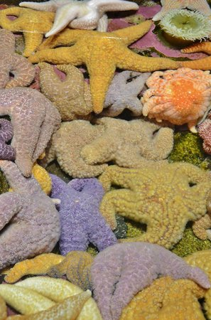 Oregon Coast Aquarium: We loved the tidepool exhibit
