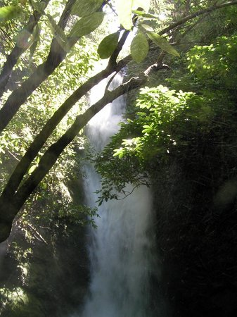 Ohau Stream Walk: waterfall