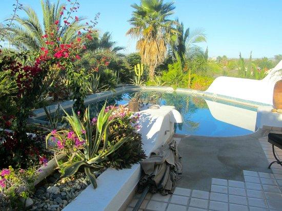 Casa Contenta Bed & Breakfast: Vegetation around pool