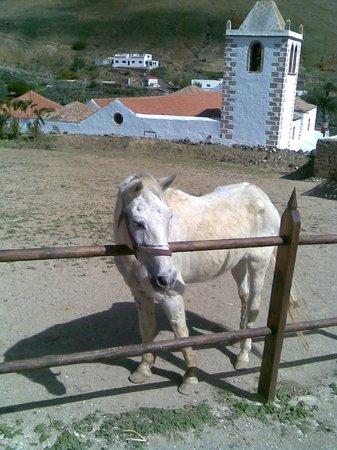 Casa Princess Arminda: White horse on the upper terrace