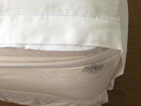 The Westin Beach Resort, Fort Lauderdale : Hole in the mattress! And