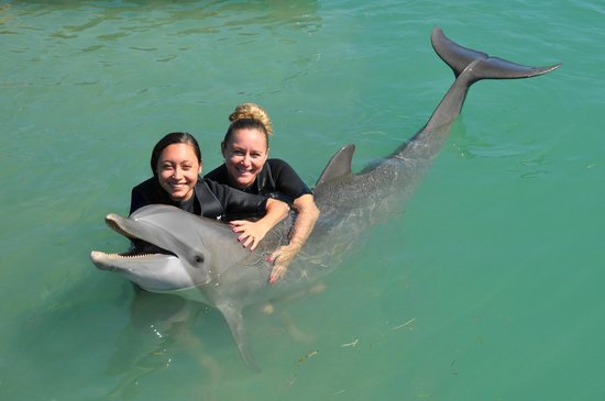 Hawks Cay Resort: The Dolphin Experience