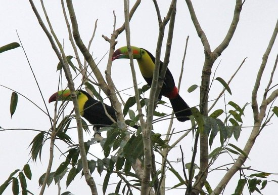 Mountain Equestrian Trails : Keel-billed toucans