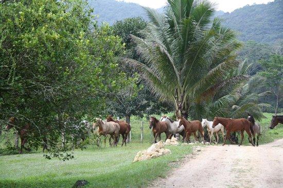 Mountain Equestrian Trails : Fresh Horses