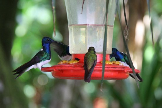 Mountain Equestrian Trails : Hummers at feeder