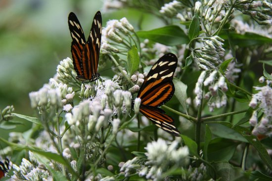 Mountain Equestrian Trails: Butterfly House