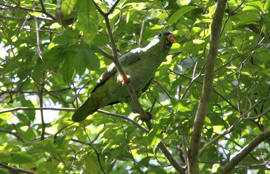 Mountain Equestrian Trails : Mealy parrot