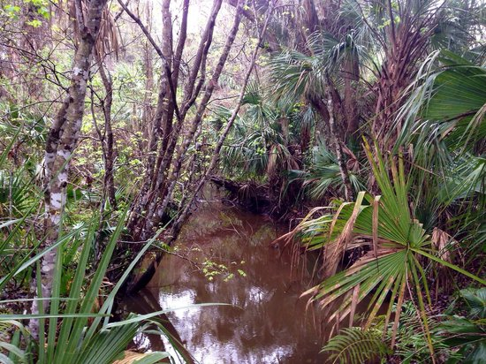 Enchanted Forest Sanctuary : Coquina Trail