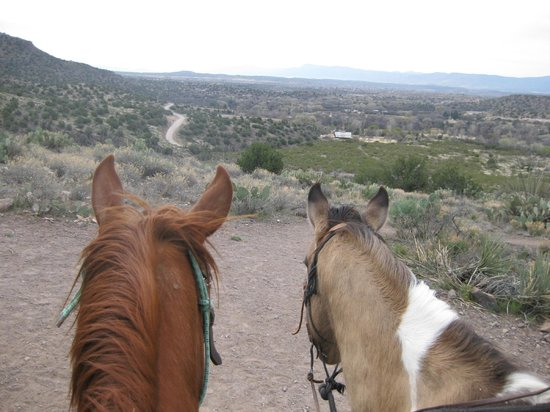Horsin Around Adventures: View from the top...of the horses!