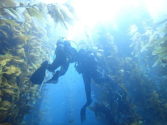 Dive Catalina : Ron Moore exceeded our expectations.