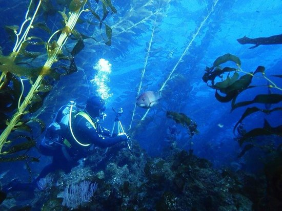 Dive Catalina : What a wonderful adventure!