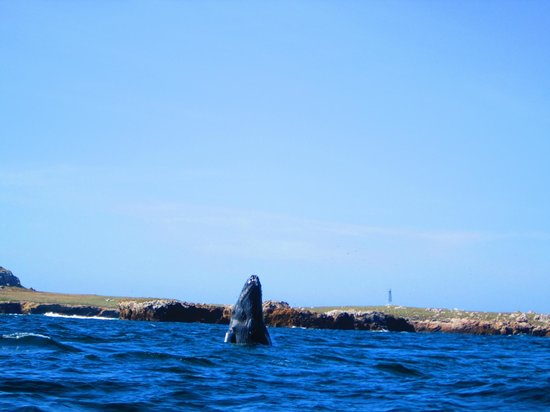 Sunset Plaza Beach Resort & Spa: Picture taken on Whale Watching Excursion