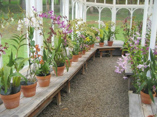 Orchid House and Gardens: Orchids in the green house