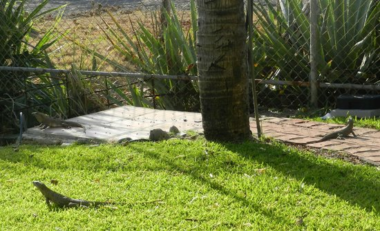 Doubletree Resort by Hilton, Central Pacific - Costa Rica: lizards