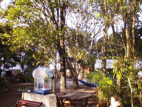 Everglades International Hostel: the parrot and hammocks