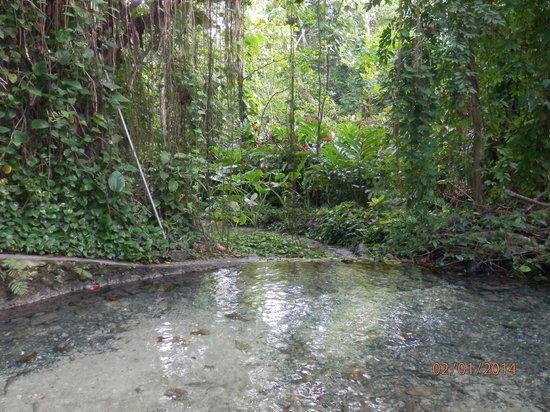 Rainforest Adventures Jamaica: *