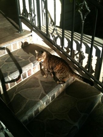 The Historic Peninsula Inn : The cat that greated us outside ;-)