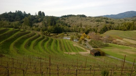 Benziger Family Winery : hillside pic from tour