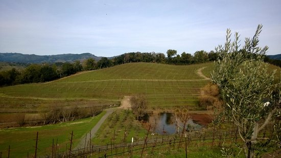 Benziger Family Winery: another hillside