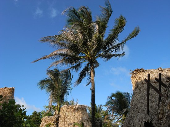 Ramon's Village Resort : Thatched roofs and great shade
