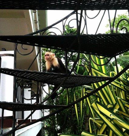 La Mariposa Hotel : Monos!